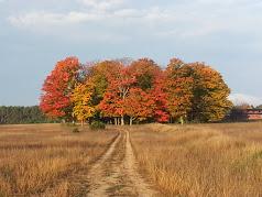 Fall Scenes 2014